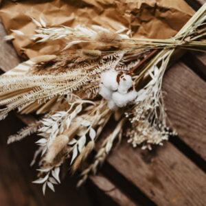 Cotton Fern